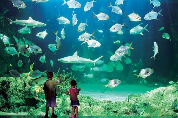 Sidnejski akvarijum